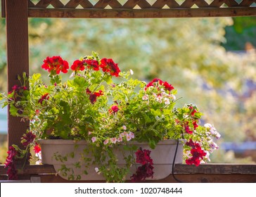 red geraniums and pink calibrachoa in a deck rail planter with water conserving drip watering system
