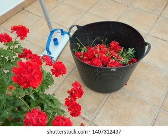 red geraniums in a pot, next to a basket with picked, withered flowers on a tiled path, a gardener's prop