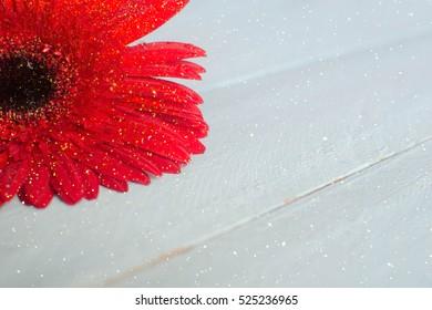 Red gerbe flower
