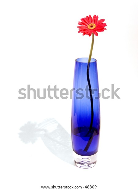 A red Gerber (or Gerbera) Daisy in a blue vase against a white background. A light shadow is cast