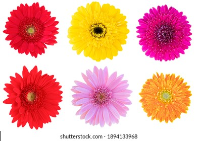 Red Gerbera Daisy,Pink Gerbera Daisy,Yellow Gerbera Daisy and Orange Gerbera Daisy as background picture.flower on clipping path.