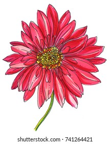 Red gerbera flower blossom. Hand drawn watercolor tropical exotic flower on white background. Botanical wedding romantic illustration for print card, invitation design. Japanese style. Retro, vintage.