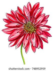 Kvetiny Rostliny Kresba Stock Ilustrace Snimky A Vektory Shutterstock