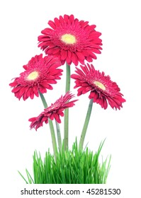 red gerberas in grass over white background