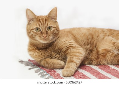 red (ginger) cat lying isolated on rag against white background, selective focus