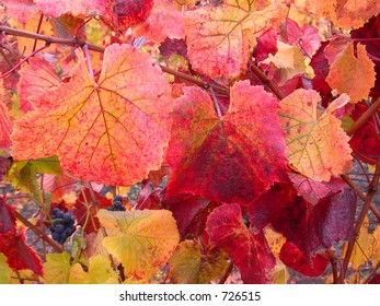 Red Grape Leaves