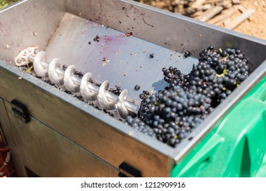 Red grapes are crushing by industrial grape crusher machine