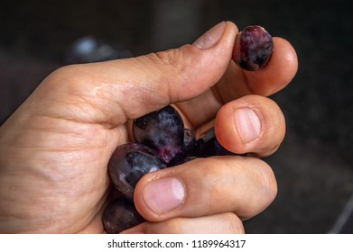 Red grapes in hand to be eaten. Personal Point of View