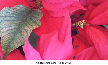 Red and green flower leaves