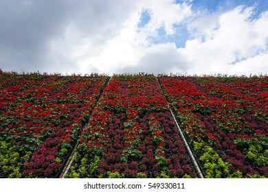 red and green flowers on sky background.