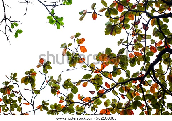 red and green leave on white background, image for spring summer background.