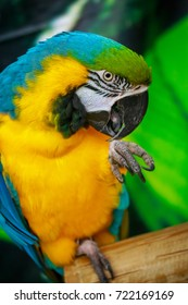 Red and green macaw parrot isolated on withe background