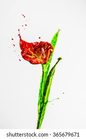 Red and green paint made beautiful lily flower