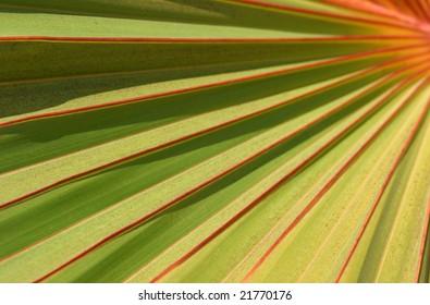red / green Palm leaf