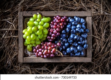 Red green purple grapes branches in old rustic wooden box on straw and wooden table colorful overhead in studio