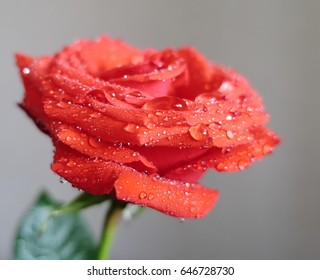 red green rose water