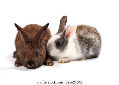 Red and grey rabbit on white background