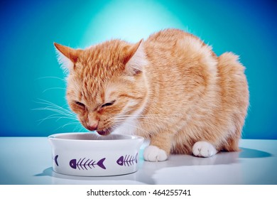 Red Haired Domestic Cat Does Not Like His Food