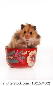 Red hamster in a cup (isolated on white)