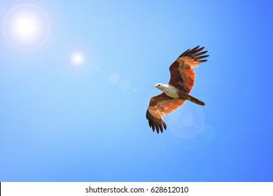 Red Hawk spread his wings in the sky.