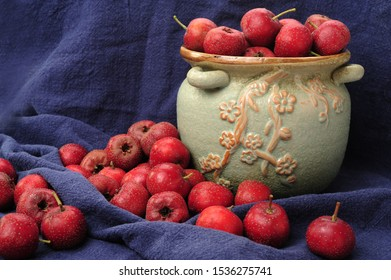 Red Hawthorn Berries. Hawthorn or common hawthorn or Crataegus monogyna berries isolated.