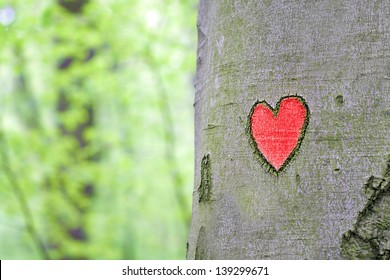 red heart engraved in the tree