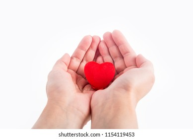 The red heart in the hands is isolated.