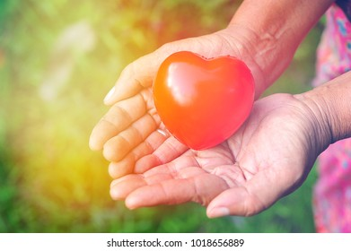 Red heart in hands.Heart care concept.