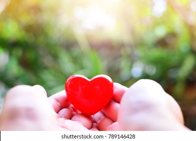 red heart on hand for concept love ,health  and charity philanthropy