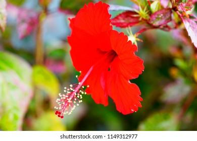 Parts Hibiscus Flower Images Stock Photos Vectors Shutterstock