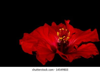 red hibiscus in the right corner and on a dark background