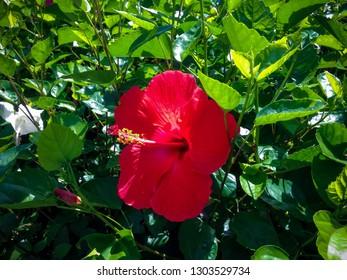 Bali Rosa Images Stock Photos Vectors Shutterstock