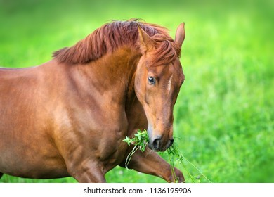 Red horse close up portrait in spring green landscape