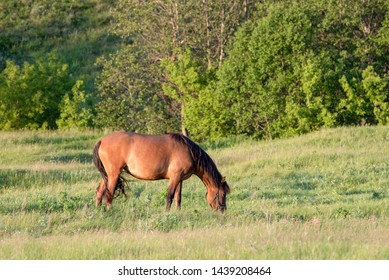 Red horse eating grass in field in summer day. Copy space
