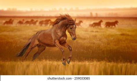 Red horse galloping, jumps in the grass lit by the rays of dawn. Stallion against the backdrop of a herd of horses.