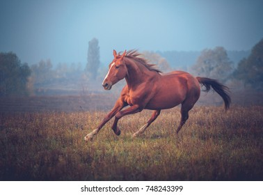 Red horse galloping on the trees background in autumn