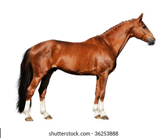 red horse isolated on the white background