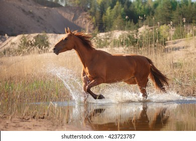 Red horse jumps over water
