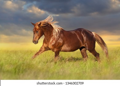 Red horse with long blond mane in motion on field