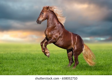 Red horse with long blond mane rearing up in green field against beautiful sky