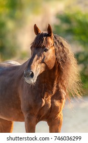 Red horse with long mane close up portrait