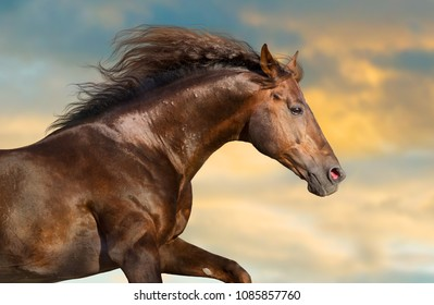 Red horse with long mane portrait against sunset sky