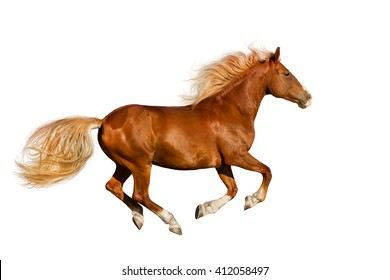 Red horse with long mane run gallop isolated on white background