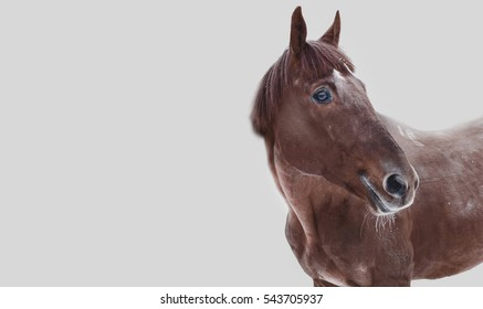 Red horse on a gray background
