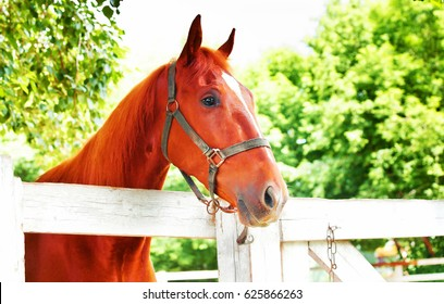 red horse on the place of school riding on a background of green leaves of the trees