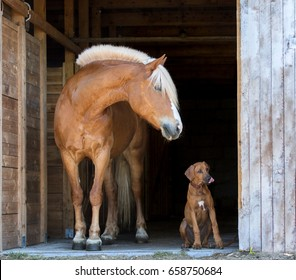 Red horse and rhodesian ridgeback puppy on the black background