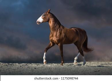 Red horse run in desert dust against dark dramatic sky