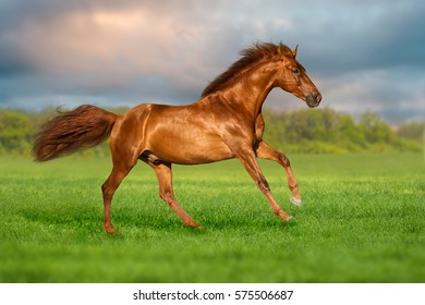 Red horse run on green grass against beautiful sky