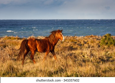 red horse running at the coast, location - Wellington, North Island, New Zealand. Soft selective focus and shallow depth of field.