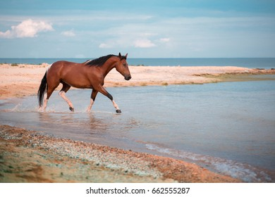Red horse runs in the water of the blue sea